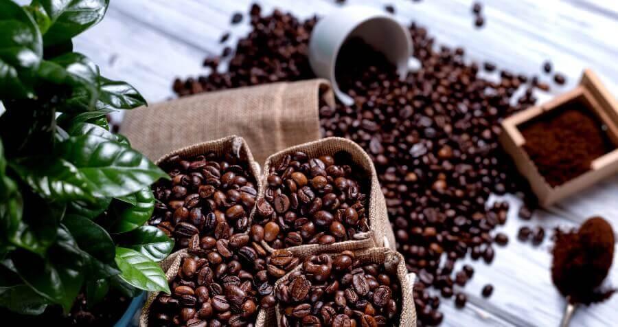 Купити моносорта кави Дім Кави